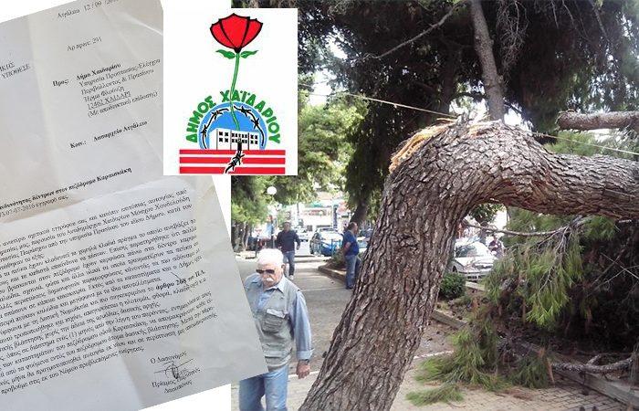Τα δέντρα υπάγονται σε δική τους νομοθεσία!