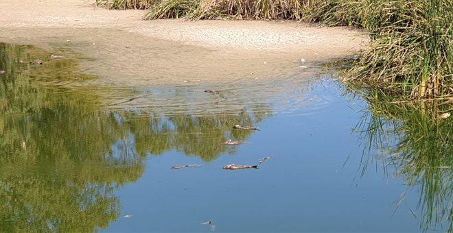 Σε Εισαγγελέα προσφεύγει ο Δήμος Ιλίου για την εξαθλίωση του Πάρκου Τρίτση