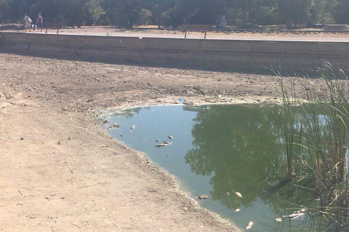 Το Πάρκο Τρίτση εκπέμπει SOS – Νεκρά ψάρια και σκουπίδια συνθέτουν σκηνικό πλήρους εγκατάλειψης (φωτό – vid)