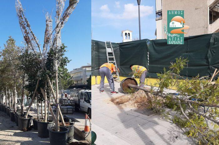 Με την πρώτη παραλαβή φυτών και δένδρων, ξεκίνησε η διαμόρφωση της πλατείας Αγίας Ελεούσας-Το κέντρο της πόλης αλλάζει όψη