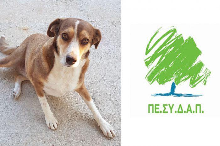 Ο ΠΕΣΥΔΑΠ διαθέτει στους 19 Δήμους – μέλη του ξηρά τροφή για την σίτιση των αδέσποτων σκύλων τους