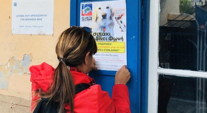 Η Αίγινα φιλοδοξεί να γίνει η πρώτη πόλη χωρίς αδέσποτους σκύλους -Το πρόγραμμά της