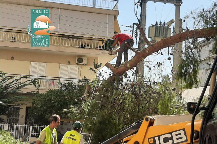 Οι υπηρεσίες του Δήμου αποσόβησαν κίνδυνο από σαθρό τμήμα κορμού πεύκου, περίπου 2 τόνων, στην πλατεία Αγίας Ελεούσας