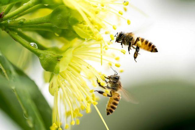Πώς το δηλητήριο της μέλισσας σκοτώνει καρκινικά κύτταρα σε 60′!