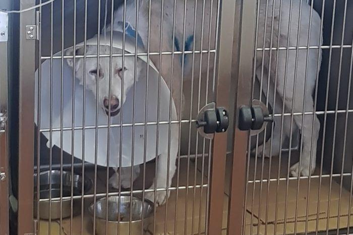 Νίκαια: Καθηγητής μαχαίρωνε με μανία σκύλο στη μέση του δρόμου - Φαίνεται να ανακάμπτει μετά την εγχείρηση