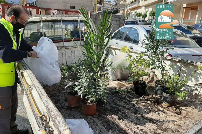 Ο … «απαγωγέας» των λουλουδιών τα επέστρεψε και από σήμερα βρίσκονται και πάλι στην θέση τους, ομορφαίνοντας την πόλη μας!