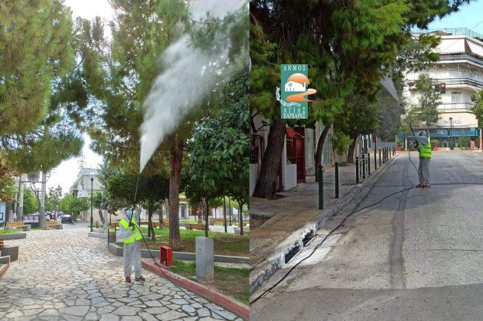 Ενέργειες δήμου  σχετικά με την καταπολέμηση της πυτιοκάμπης του πεύκου