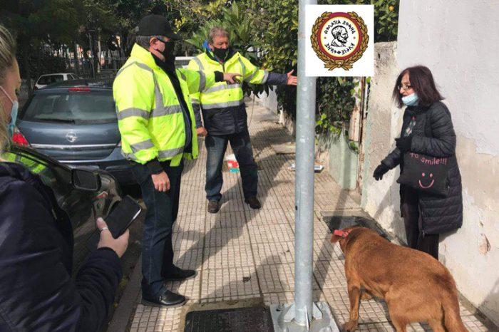 Μέτρα Προστασίας για τα αδέσποτα ζώα του δήμου Αιγάλεω