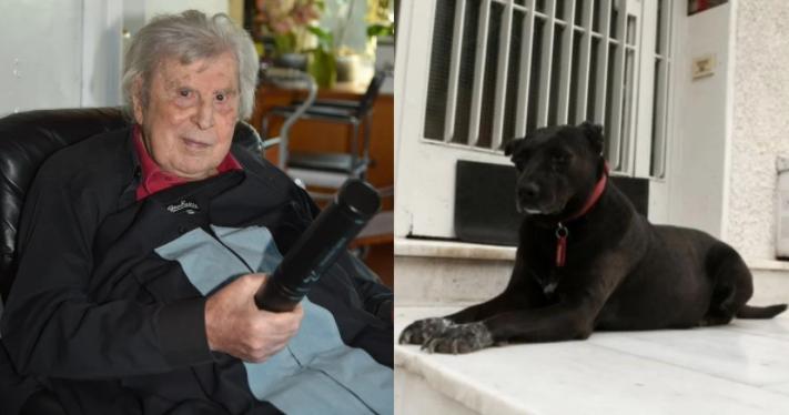 Συγκινεί ο σκύλος του Μίκη Θεοδωράκη που πενθεί για τον θάνατο του αφεντικό του έξω από το σπίτι του