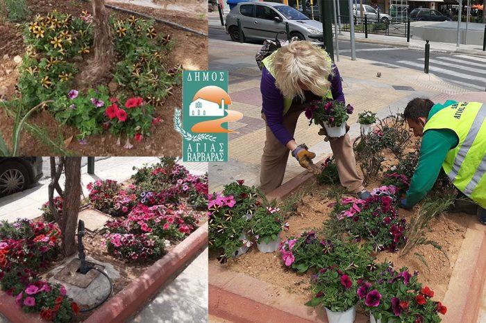 Ευφορία και αισιοδοξία προκαλούν τα πολύχρωμα παρτέρια του Δήμου μας