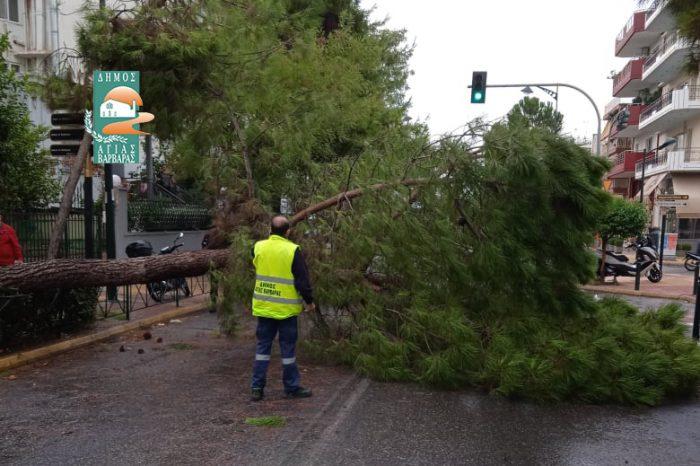 Πτώση δένδρου επί της Μεγάλου Αλεξάνδρου – Άμεση απομάκρυνσή του από τις υπηρεσίες του Δήμου Αγίας Βαρβάρας